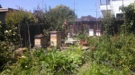 Bonnie's fruit- and bee-filled garden